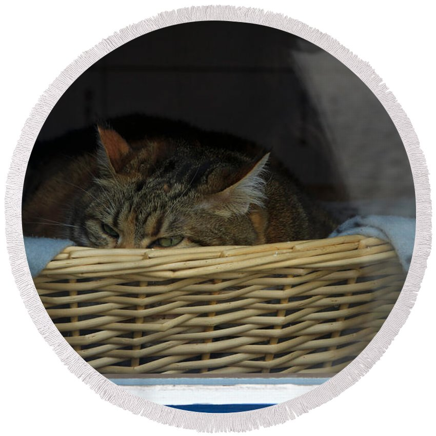 Cat Round Beach Towel featuring the photograph Cat In The Window by Louise Heusinkveld