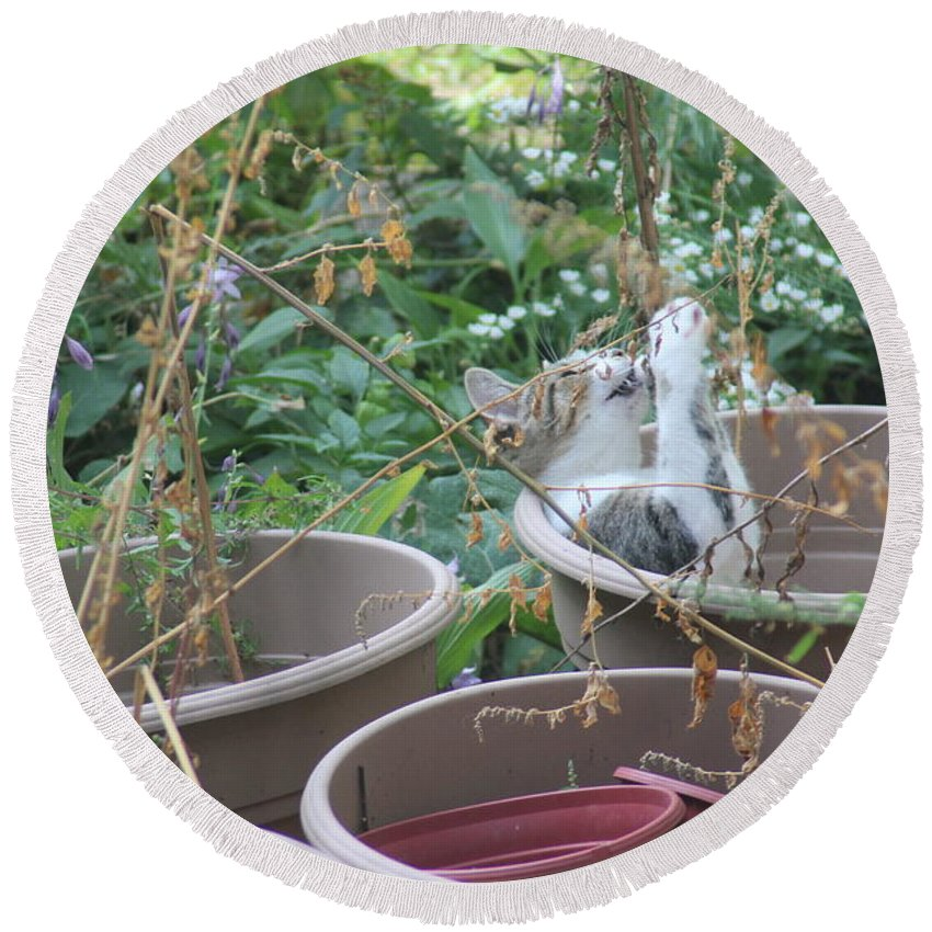 Cat Round Beach Towel featuring the photograph Cat Playing In Flowerpot by Cliff Ball