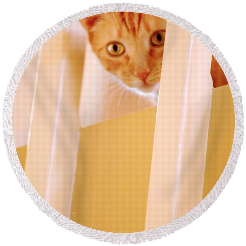 Animal Round Beach Towel featuring the photograph Cat Spy by Jill Reger