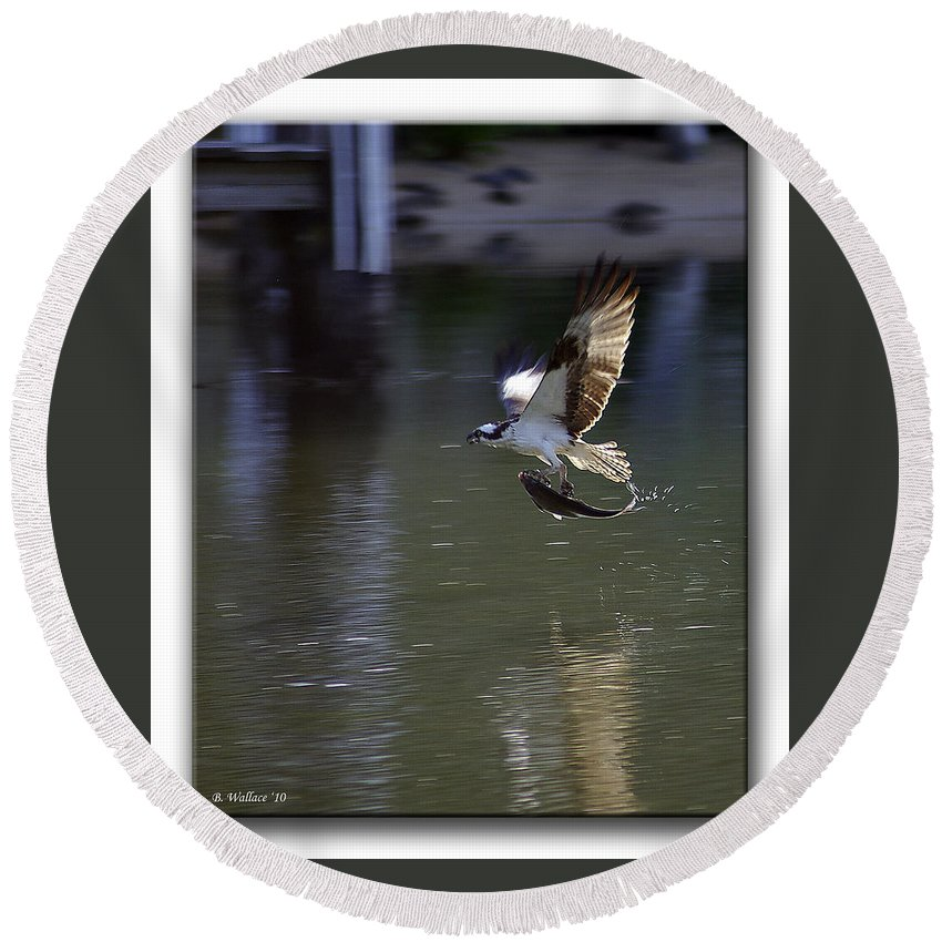 2d Round Beach Towel featuring the photograph Catch Of The Day by Brian Wallace