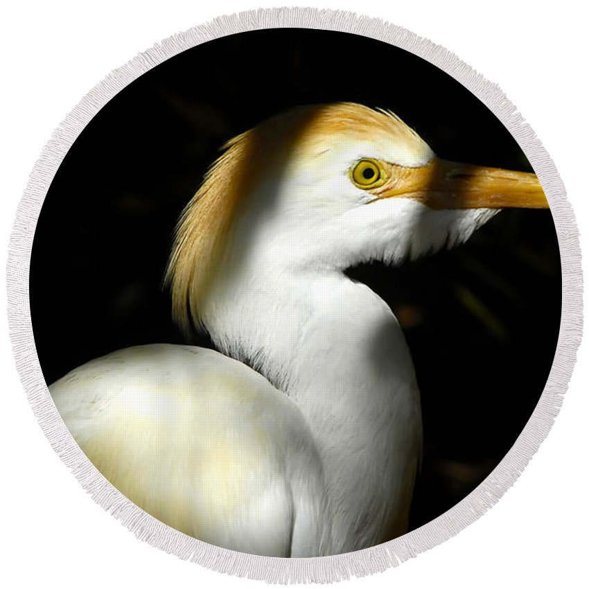 Cattle Egret Round Beach Towel featuring the photograph Cattle Egret In Shadow by David Lee Thompson