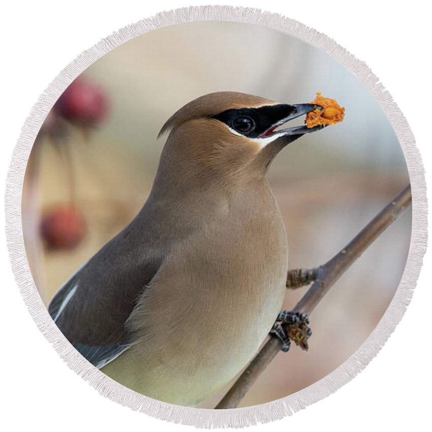 Birds Round Beach Towel featuring the photograph Cedar Waxwing by David Lipsy