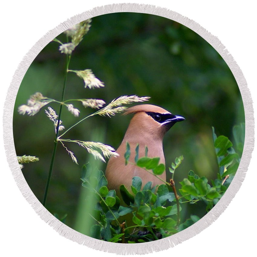 Birds Round Beach Towel featuring the photograph Cedar Waxwing Facing Right by Ben Upham III