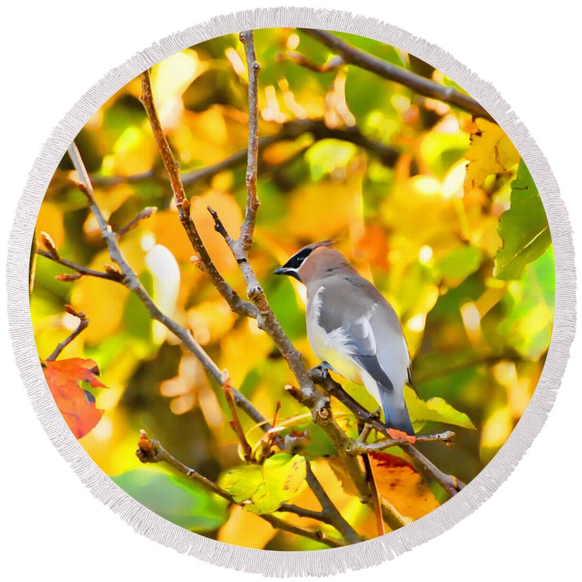 Cedar Waxwing Round Beach Towel featuring the photograph Cedar Waxwing In Autumn Leaves by Kerri Farley