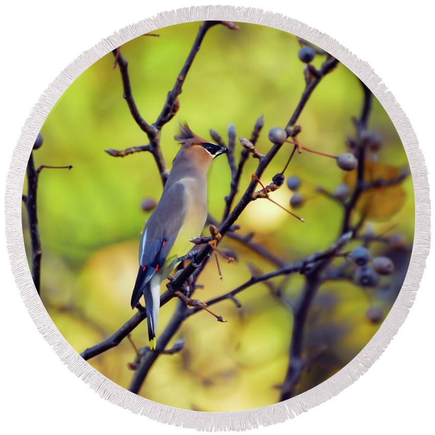 Cedar Waxwing Round Beach Towel featuring the photograph Cedar Waxwing With Windblown Crest by Kerri Farley of New River Nature