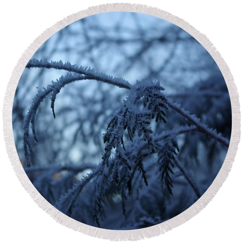Cedar Round Beach Towel featuring the photograph Cedars Of Ice by Cindy Johnston