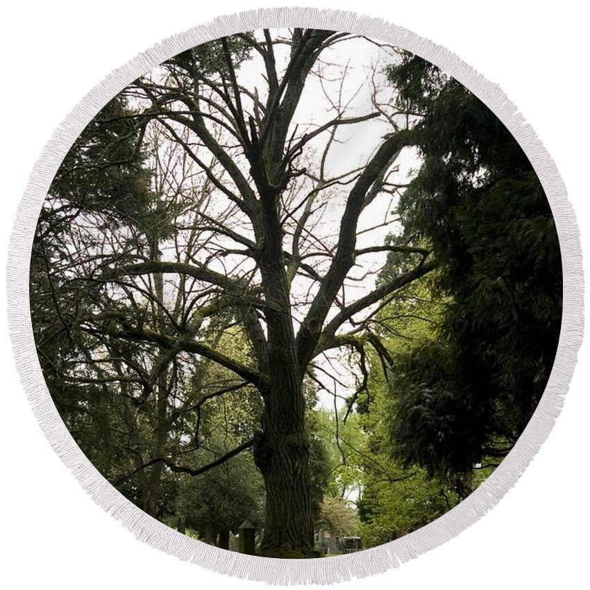 Cemetery Round Beach Towel featuring the photograph Cemetery Trees 2 by Sara Stevenson