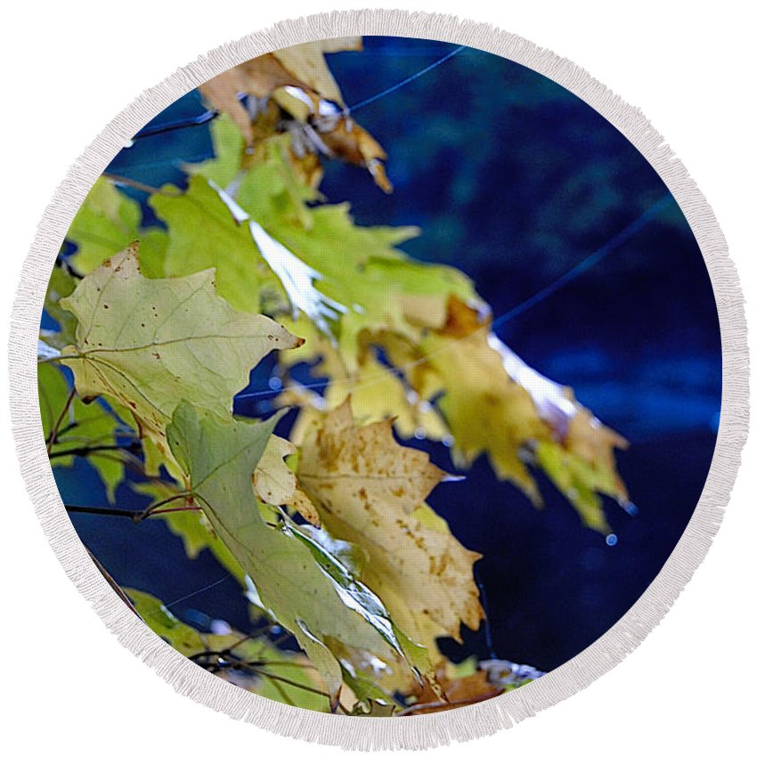 Leaves Round Beach Towel featuring the photograph Changing Seasons by Kathleen Sartoris