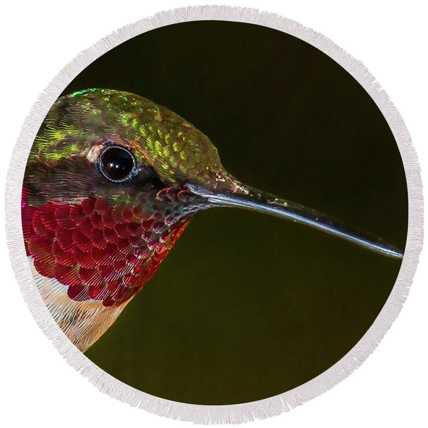 Hummingbird Round Beach Towel featuring the photograph Checking Out The Photographer by Janice Carter