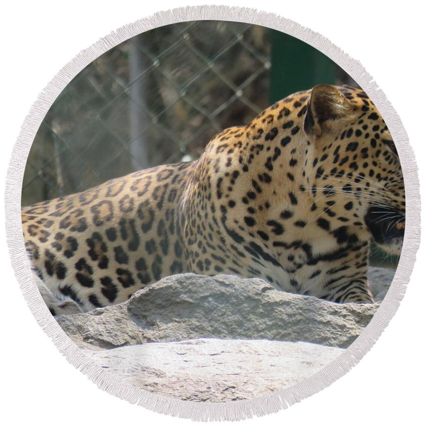 Leopard Round Beach Towel featuring the photograph Cheetah by Utpal Datta