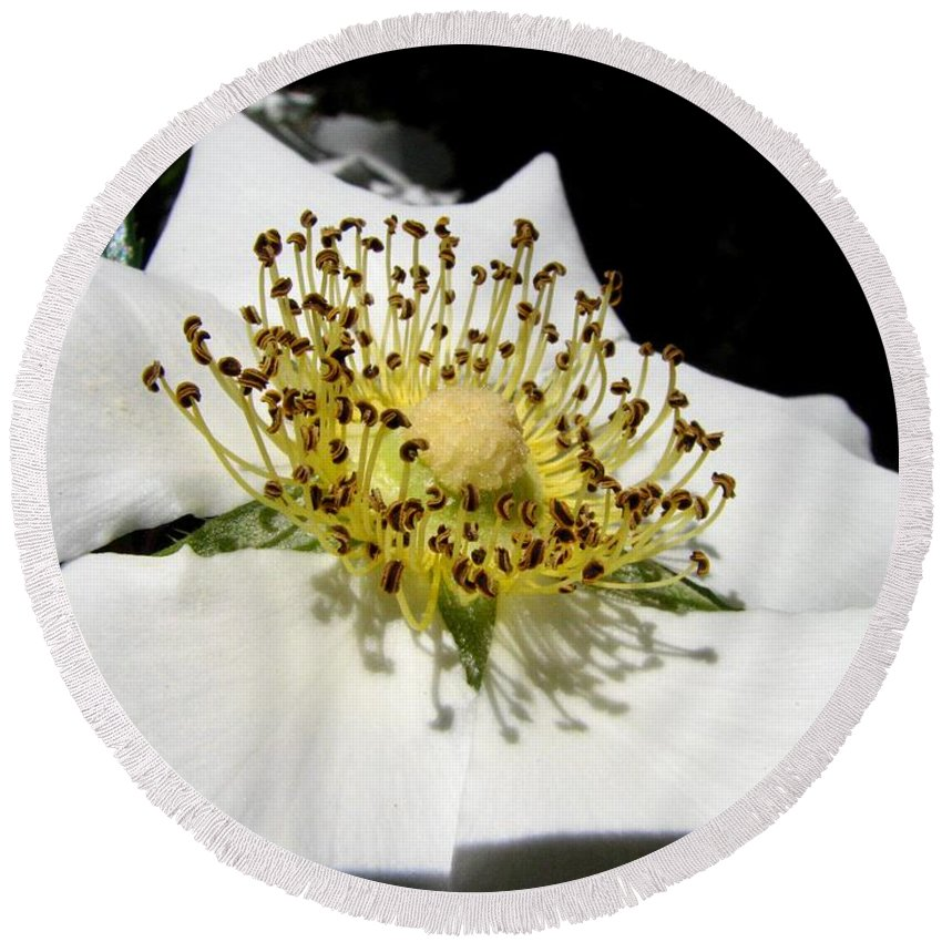 Cherokee Rose Round Beach Towel featuring the photograph Cherokee Rose Macro by J M Farris Photography