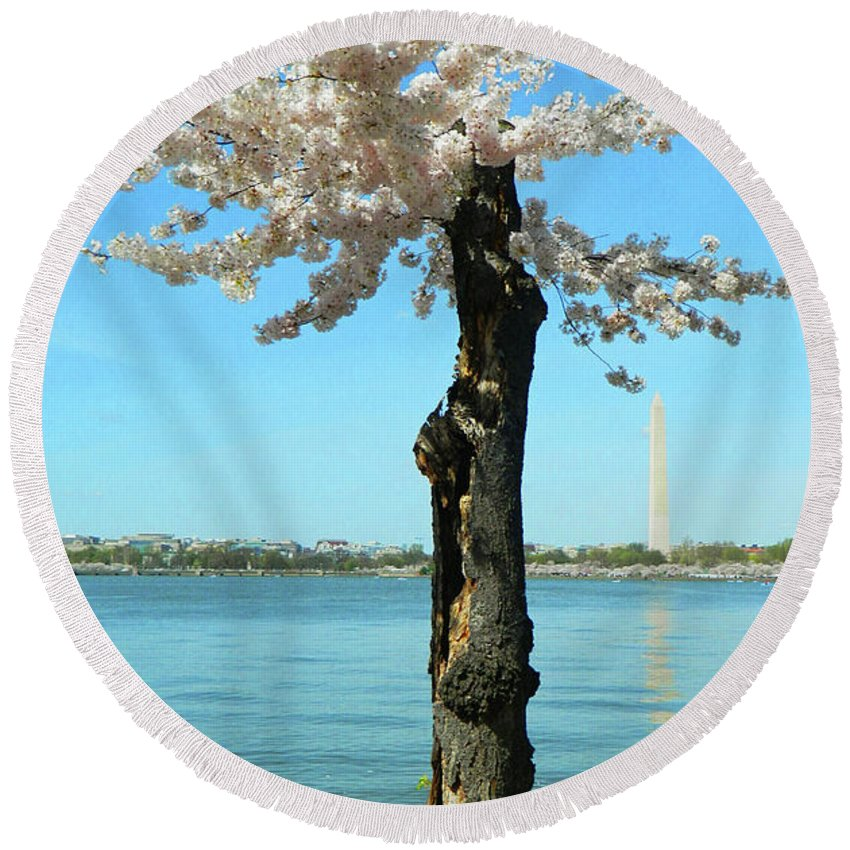 Cherry Blossom Portrait Round Beach Towel featuring the photograph Cherry Blossom Portrait by Emmy Marie Vickers