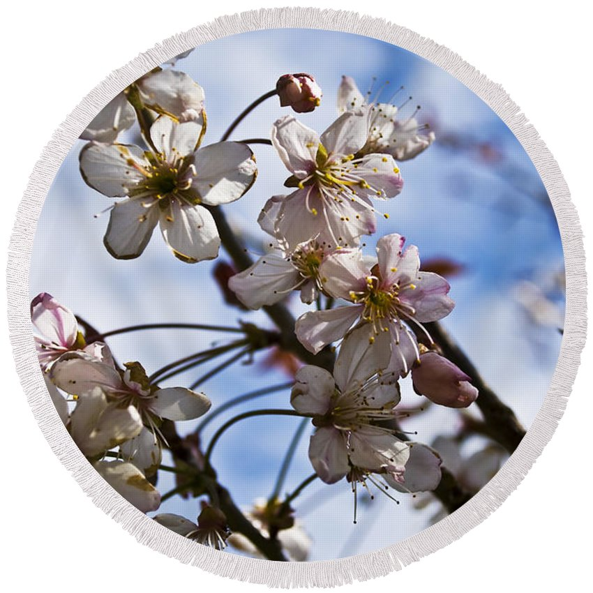 Flower Round Beach Towel featuring the photograph Cherry Blossom Tree by Svetlana Sewell