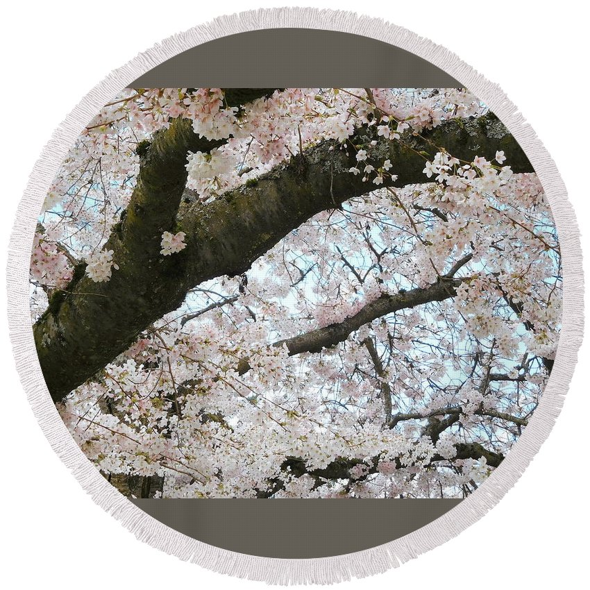 Cherry Round Beach Towel featuring the photograph Cherry Tree In Bloom by Maro Kentros