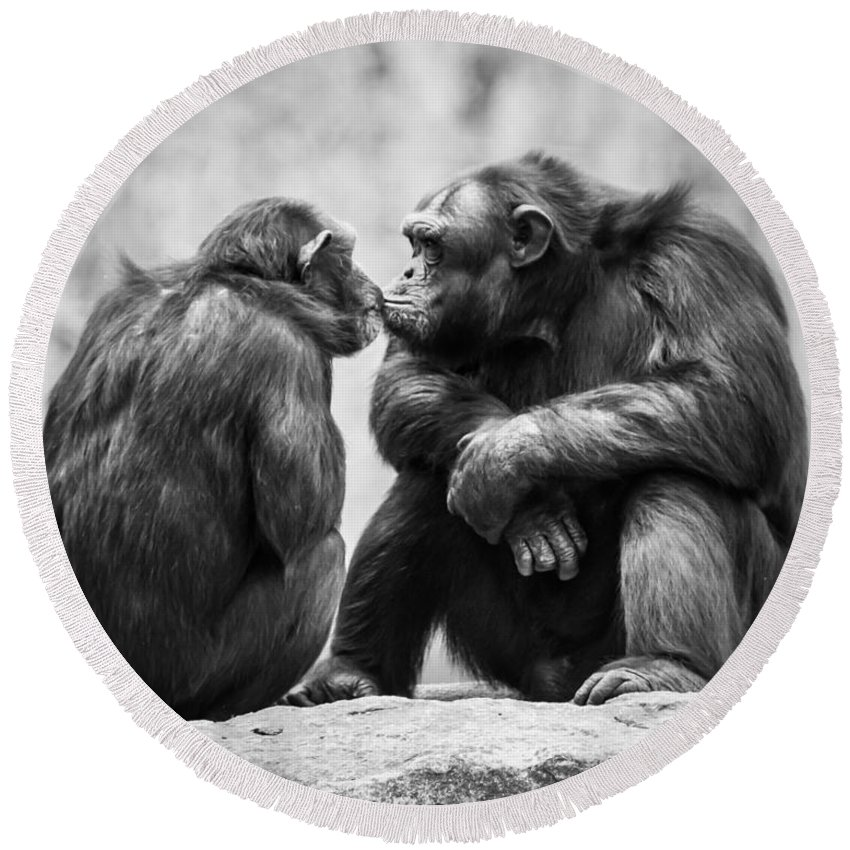 Animal Round Beach Towel featuring the photograph Chimpanzee Pair by Abeselom Zerit