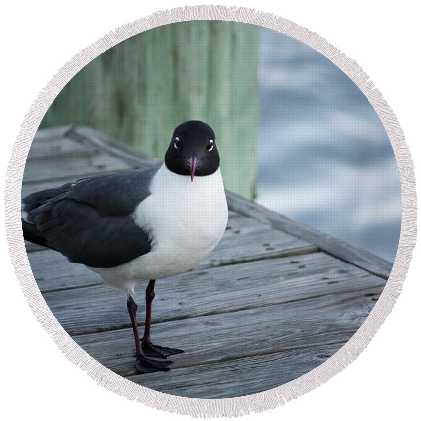 Maryland Round Beach Towel featuring the photograph Chincoteague Island - Great Black-headed Gull by Ronald Reid