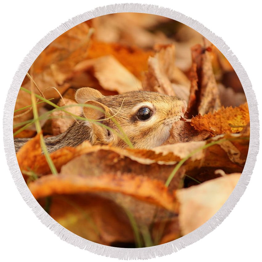 Chipmunk Round Beach Towel featuring the photograph Chipmunk Among The Leaves by Deborah Jackson
