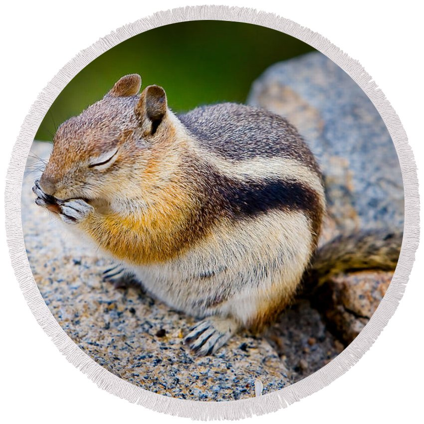 Squirrel Round Beach Towel featuring the photograph Chipmunk by James O Thompson