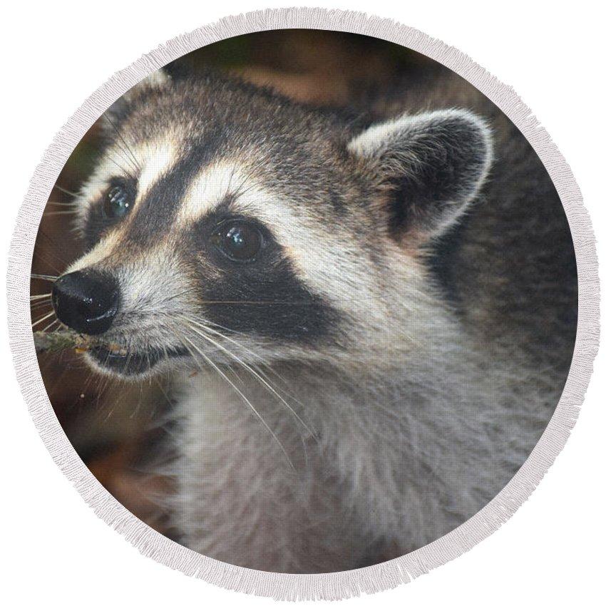 Raccoon Round Beach Towel featuring the photograph Choose Jif by Davis FlowerPower