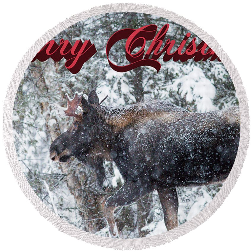 Alaska Round Beach Towel featuring the photograph Christmas Bull Moose by Tami Biorn
