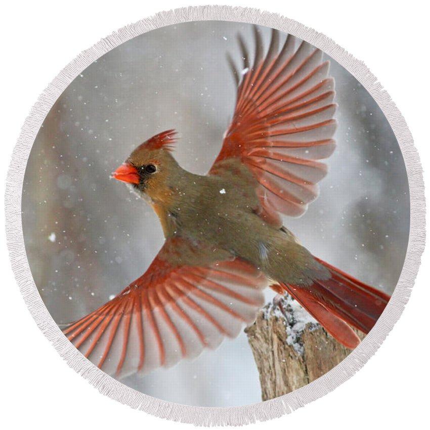 Bird Round Beach Towel featuring the photograph Christmas Card by Mircea Costina Photography