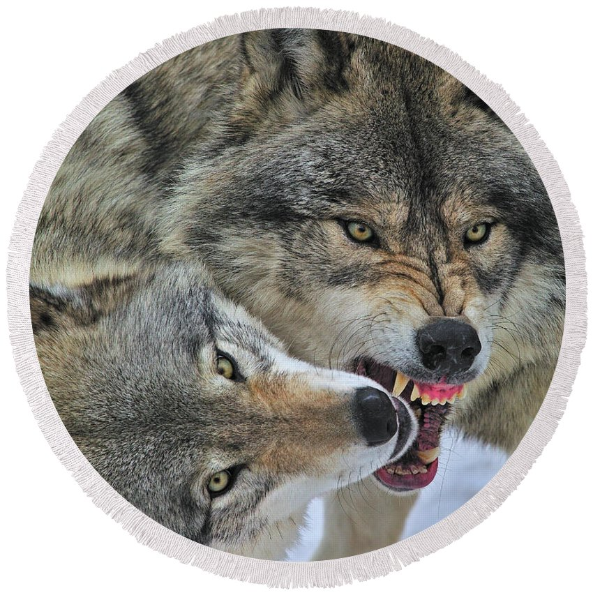 Timber Wolf Round Beach Towel featuring the photograph Circle by Tony Beck