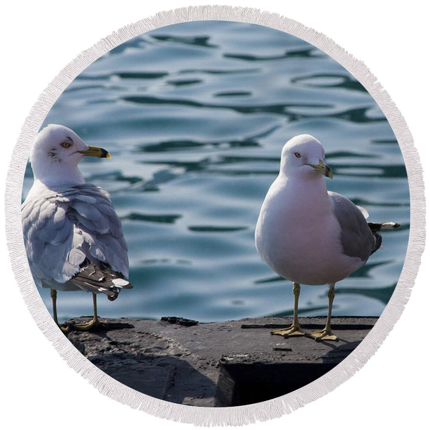 Gull Gulls Seagulls Lake Michigan Chicago Windy City Bird Couple Wave Water Pier Feather Round Beach Towel featuring the photograph City Gulls by Andrei Shliakhau