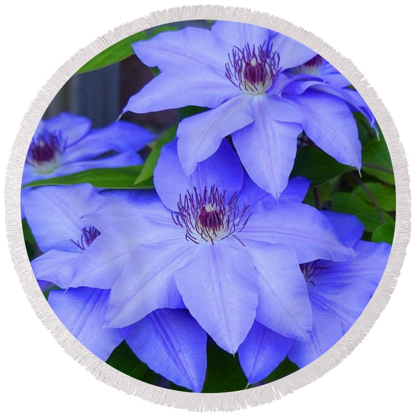 Outdoors Round Beach Towel featuring the photograph Clematis by Charles Ford