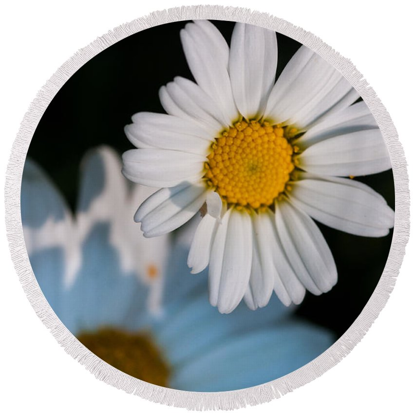Daisy Round Beach Towel featuring the digital art Close Up Daisy by Nathan Wright