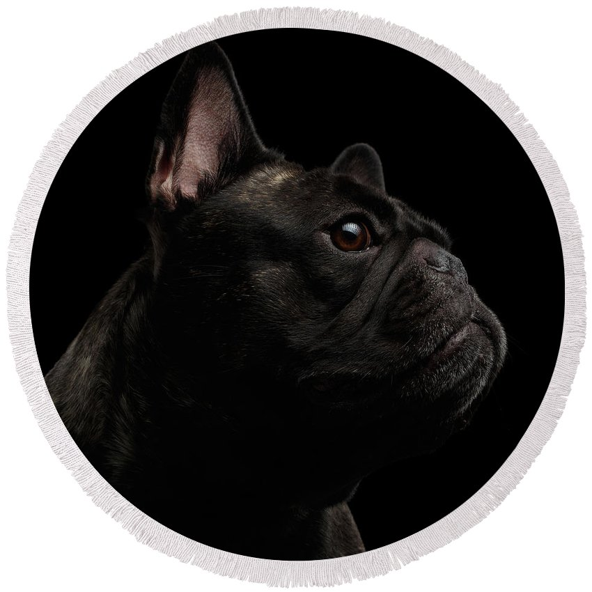 Dog Round Beach Towel featuring the photograph Close-up French Bulldog Dog Like Monster In Profile View Isolated by Sergey Taran