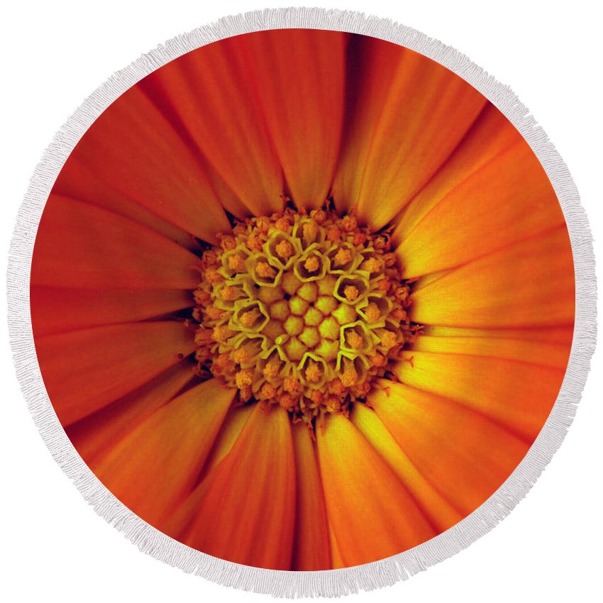 Plant Round Beach Towel featuring the photograph Close Up Of An Orange Daisy by Ralph A Ledergerber-Photography