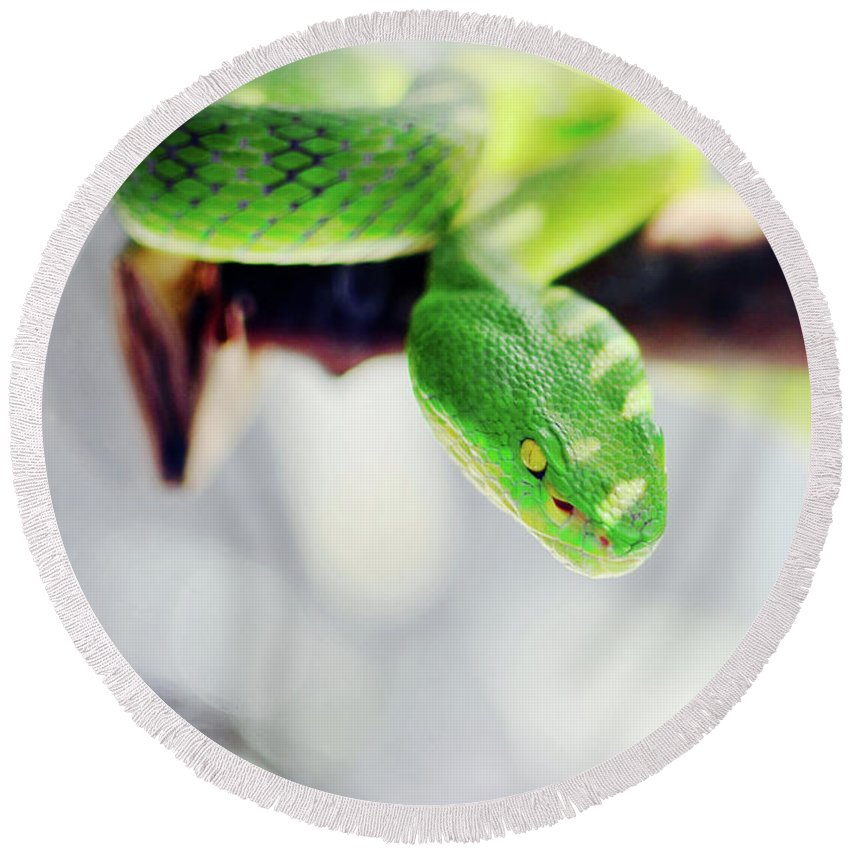 Green Round Beach Towel featuring the photograph Closeup Of Poisonous Green Snake With Yellow Eyes - Vogels Pit Viper by Srdjan Kirtic