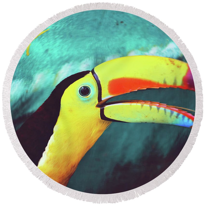 Adorable Round Beach Towel featuring the photograph Closeup Portrait Of A Colorful And Exotic Toucan Bird Against Blue Background Nicaragua by Srdjan Kirtic