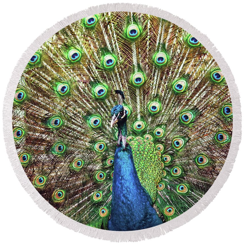 All Round Beach Towel featuring the photograph Closeup Portrait Of An Indian Peacock Displaying Its Plumage by Srdjan Kirtic