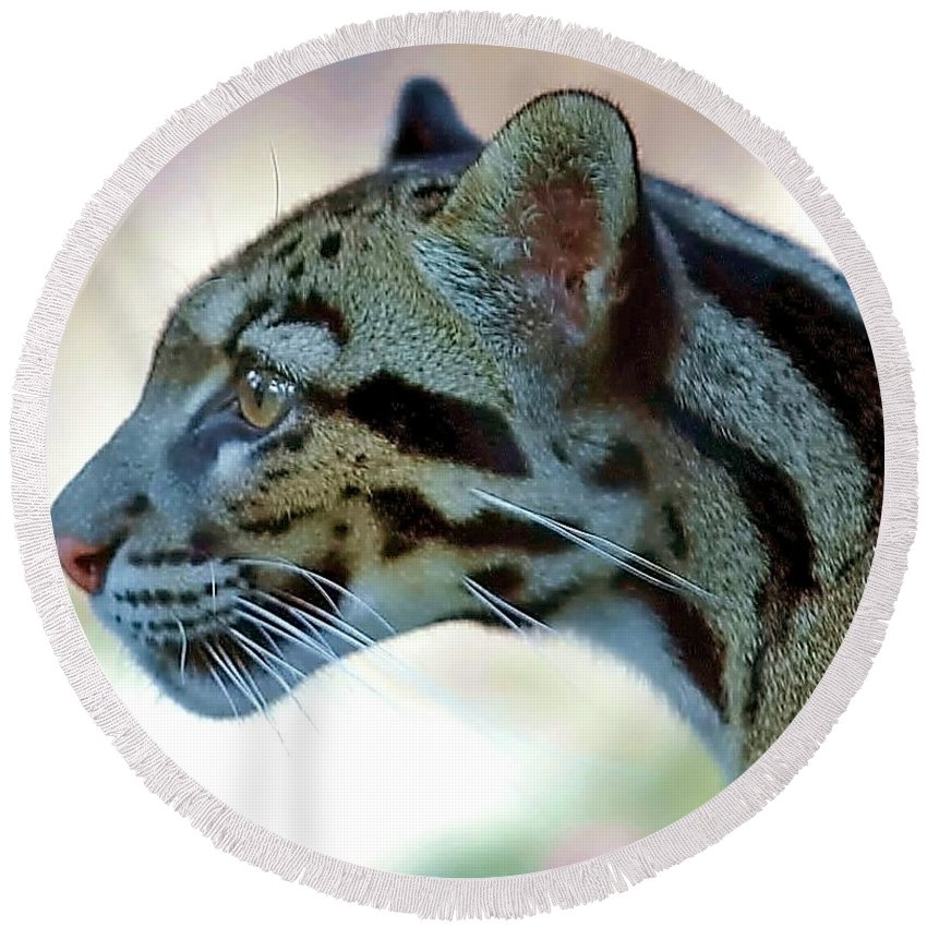 Leopard Round Beach Towel featuring the photograph Clouded Leopard by Randy Matthews