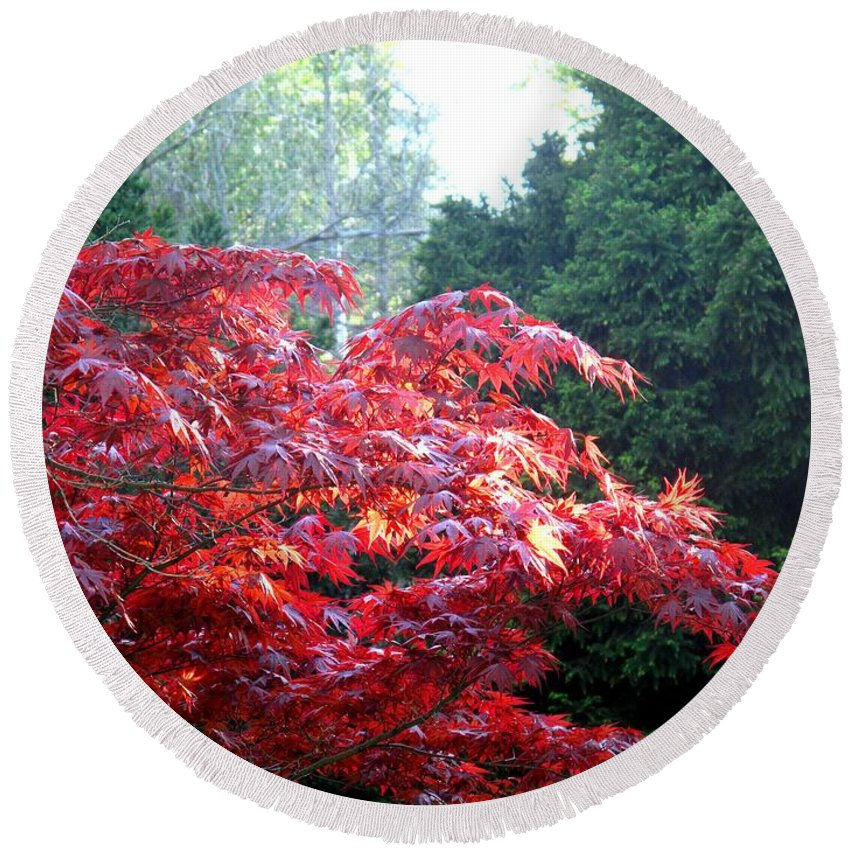 James Gardens Round Beach Towel featuring the photograph Clouds Of Leaves by Ian MacDonald