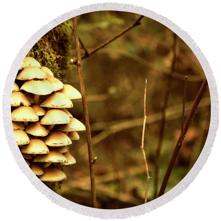 Mushrooms Round Beach Towel featuring the photograph Cluster O Shrooms by Monte Arnold