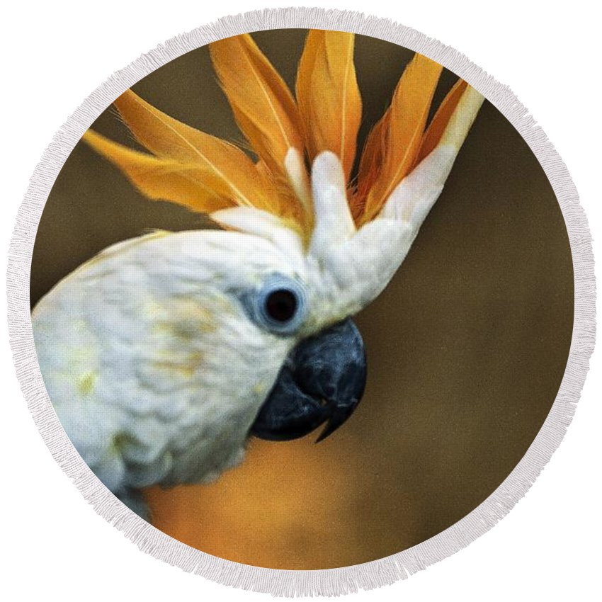 Animals Round Beach Towel featuring the photograph Cockatoo Show Off by Norman Andrus