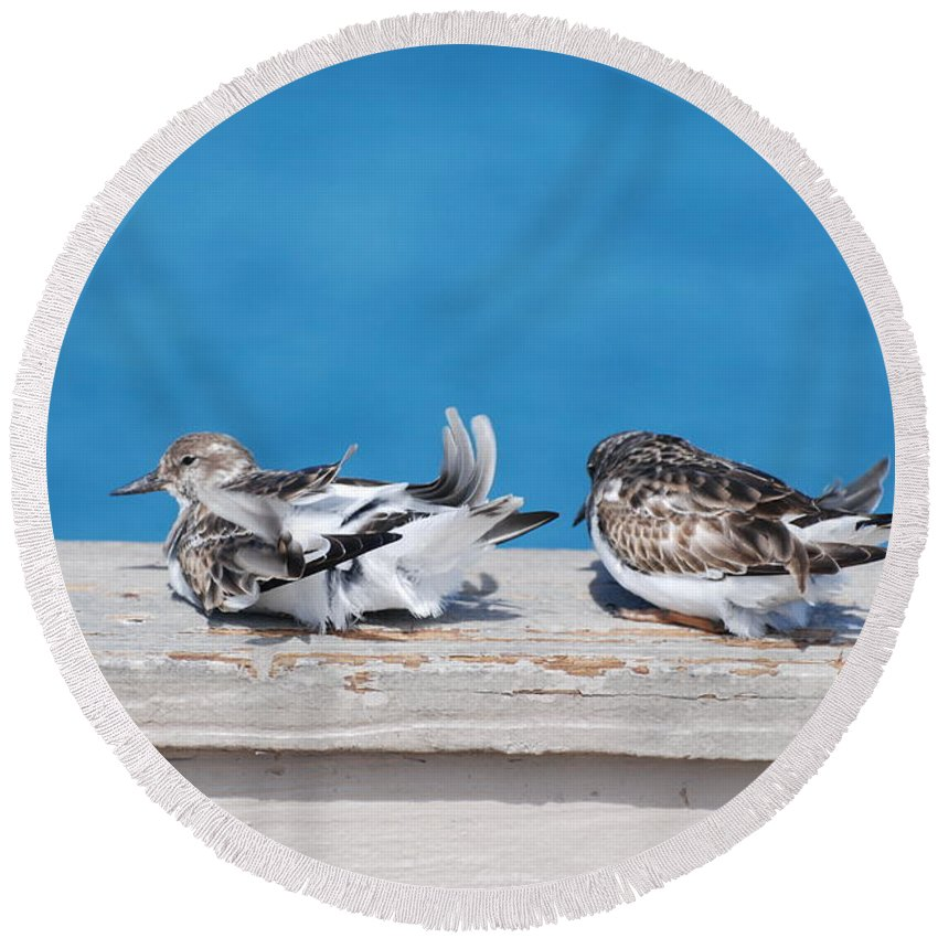 Bird Round Beach Towel featuring the photograph Cold Birds by Rob Hans