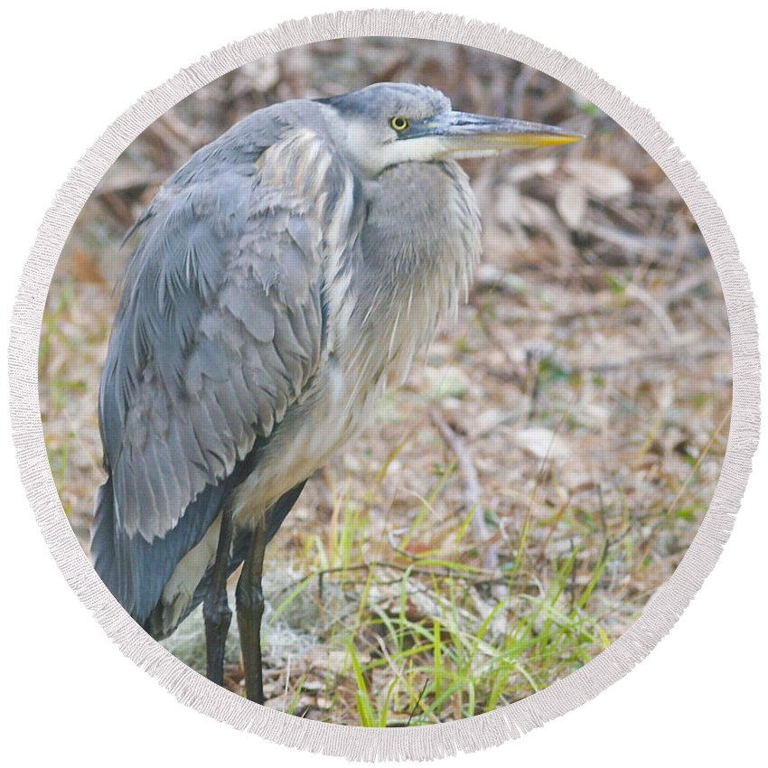 Bird Round Beach Towel featuring the photograph Cold Blue Heron by Phill Doherty