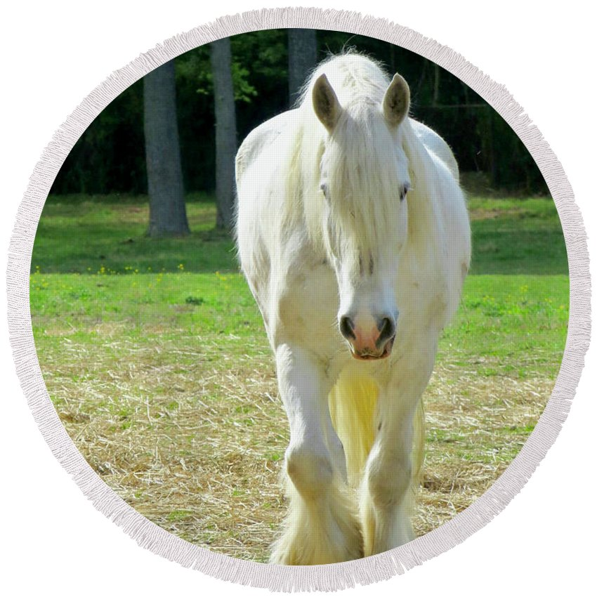 American Cream Draft Horse Round Beach Towel featuring the photograph Colonial Horse In Williamsburg by Rachel Morrison