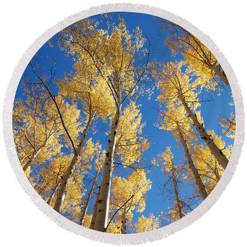 Aspen Round Beach Towel featuring the photograph Colorado Aspen by Jerry McElroy