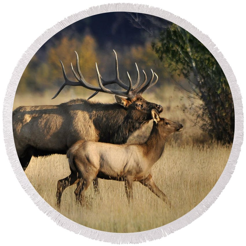 Nature Round Beach Towel featuring the photograph Colorado Elk by Nava Thompson