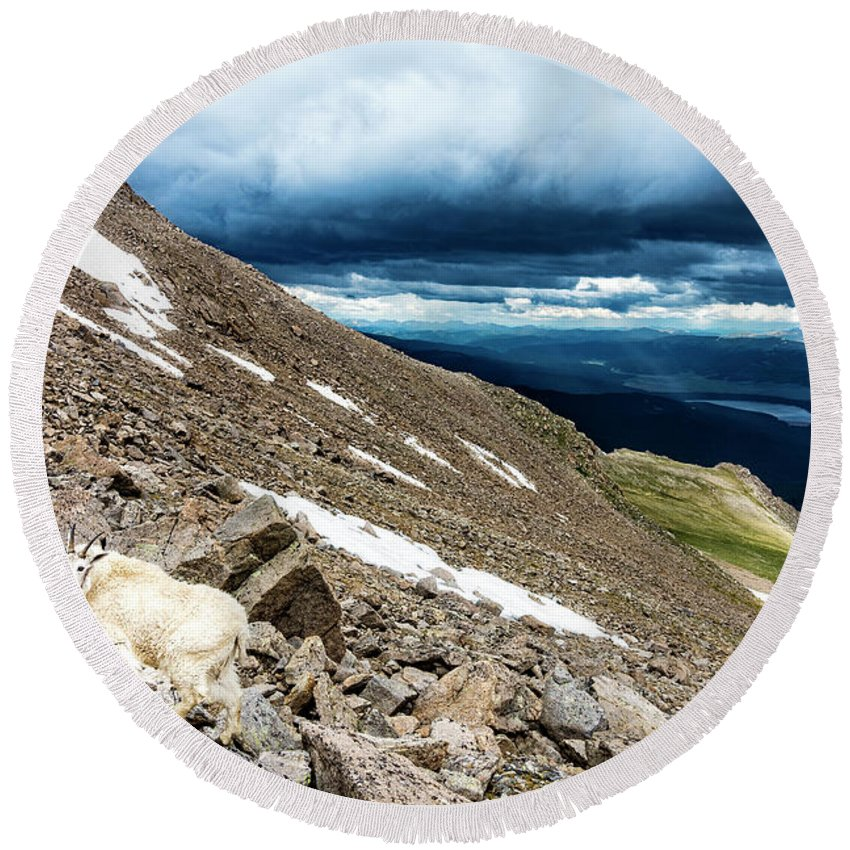 Animals Round Beach Towel featuring the photograph Colorado Mountain Goat by Bryan Toro