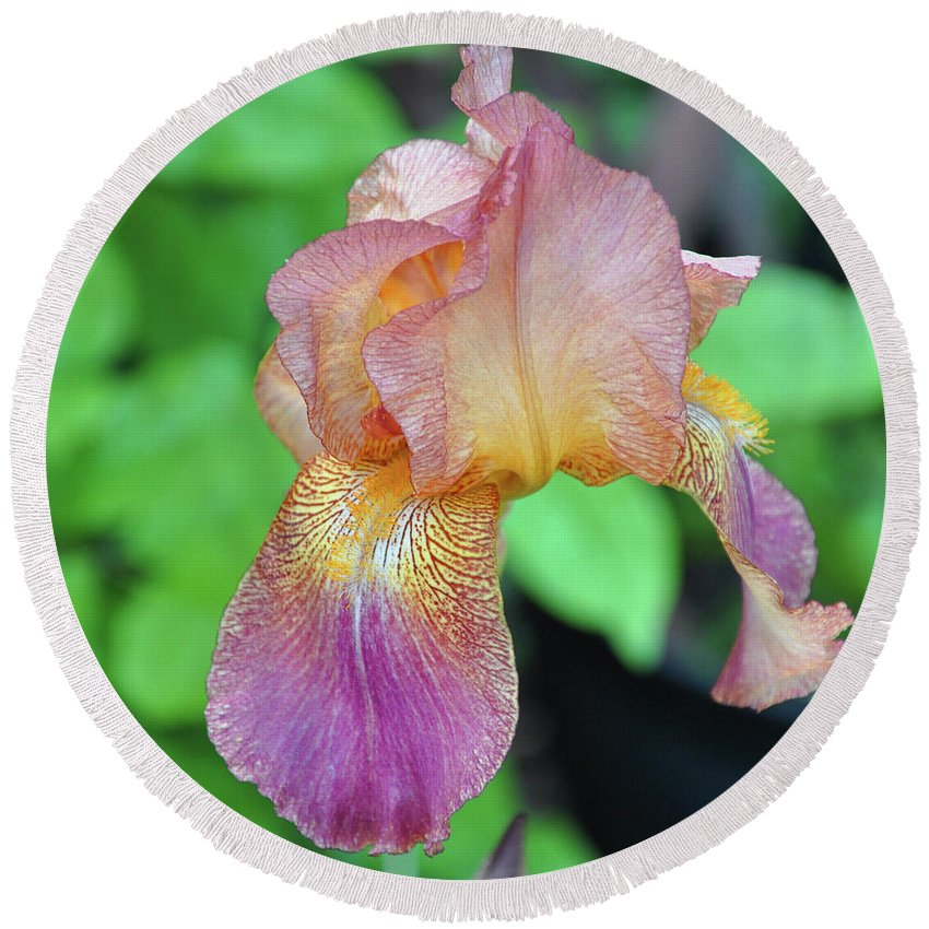 Light Round Beach Towel featuring the photograph Colored Iris by Brittany Horton