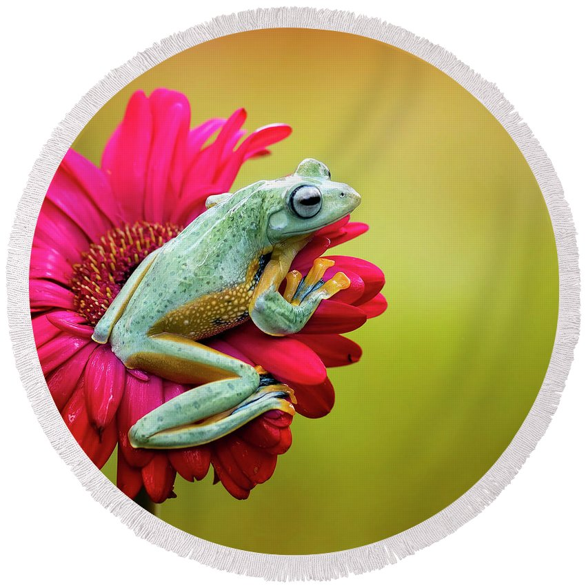 Macro Round Beach Towel featuring the photograph Colorful Frog by Fauzan Maududdin