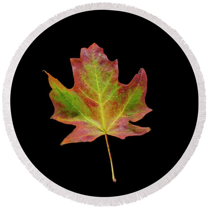 Minnesota Round Beach Towel featuring the photograph Colorful Maple Leaf by David Parker