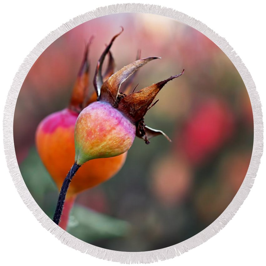 Rose Hips Round Beach Towel featuring the photograph Colorful Rose Hips by Rona Black