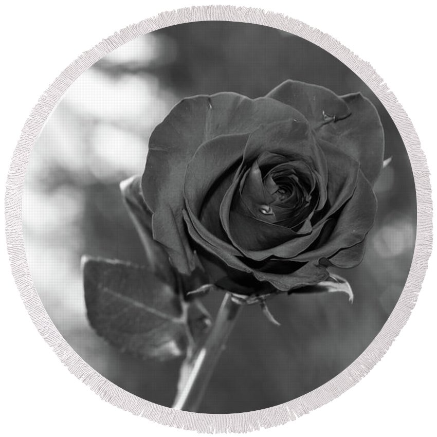 B/w Round Beach Towel featuring the photograph Colorless Rose by Ben McLachlan