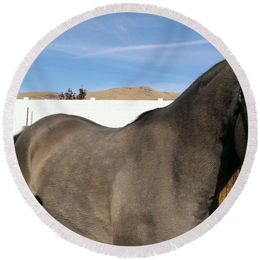 Horse Round Beach Towel featuring the photograph Colors Of Beauty by LKB Art and Photography